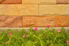 Beautiful rock wall with flower Royalty Free Stock Photography