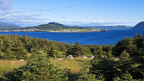 Beautiful Rocky Harbour, Newfoundland Stock Images