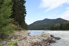 Beautiful rocky mountain river Katun. Stock Image