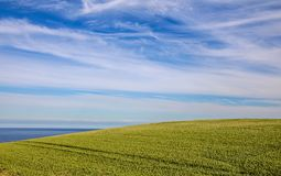 Beautiful rolling green hill against blue sky covered with Cirrus clouds and the blue Ocea royalty free stock images