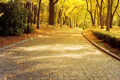 Beautiful romantic alley in a park with colorful trees, autumn landscape Royalty Free Stock Photography