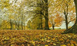 Beautiful romantic alley in a park with colorful trees. Royalty Free Stock Photography
