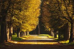 Beautiful romantic alley in a park with colorful trees and sunlight. Autumn natural background.  stock photography
