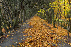 Beautiful romantic alley in a park Stock Photo