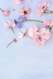 Beautiful, romantic background with pink cherry blossom and bluebells Royalty Free Stock Images