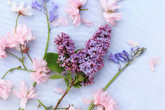 Beautiful, romantic background with pink cherry blossom and bluebells Royalty Free Stock Photo