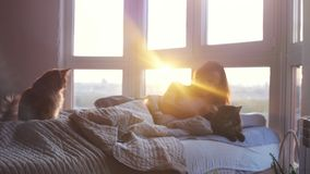 Beautiful romantic brunette young woman lying on bed by the windows has a rest with her lovely maine coon cat during stock video
