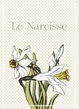Romantic card with beautiful narcissus. Beautiful romantic card with narcissus white, it is spring flower, hymn of amour Royalty Free Stock Image