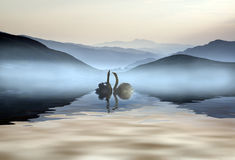 Beautiful romantic image of swans on misty lake with mountains i Royalty Free Stock Photo