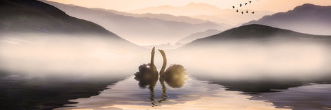 Beautiful romantic image of swans on misty lake with mountains i Royalty Free Stock Image
