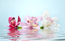 Beautiful romantic orchid flower background Stock Photo