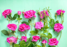 Beautiful romantic pink rose flowers with buds and leaves on gre. En background, greeting card, flat lay Royalty Free Stock Image