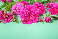 Beautiful romantic pink rose flowers with buds and leaves lies o. N green background, greeting card, close up Stock Photography
