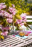 Beautiful and romantic scene in the home garden with a vase of Japanese cherry tree blossoms. On the white table Stock Images