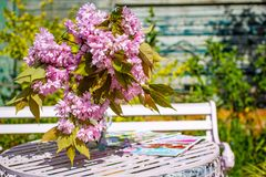 Beautiful and romantic scene in the home garden with a vase of Japanese cherry tree blossoms. On the white table Stock Photos