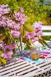 Beautiful and romantic scene in the home garden with a vase of Japanese cherry tree blossoms. On the white table Stock Photography