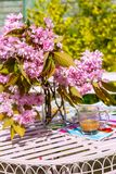 Beautiful and romantic scene in the home garden with a vase of Japanese cherry tree blossoms. On the white table Royalty Free Stock Images