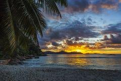 Beautiful romantic sunset on paradise beach at anse severe, la d. Beautiful romantic sunset through a palm leaf on paradise beach at anse severe, la digue Stock Photos