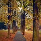 Beautiful romantic way in a park with colorful trees. Autumn natural background landscape. Royalty Free Stock Photography