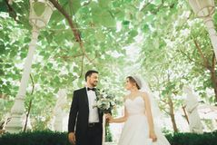 Beautiful romantic wedding couple of newlyweds hugging in green park Stock Photography