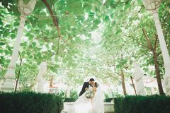 Beautiful romantic wedding couple of newlyweds hugging in green park royalty free stock photo