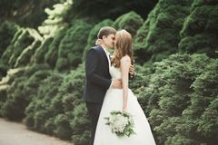 Free Beautiful Romantic Wedding Couple Of Newlyweds Hugging In Park On Sunset Stock Photos - 112676453