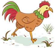 Beautiful rooster character Royalty Free Stock Photos