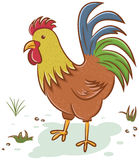 Beautiful rooster character Stock Photography