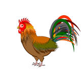 A beautiful rooster isolated on a white background Royalty Free Stock Image
