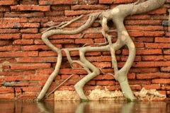 Beautiful root texture at wall . stock photos