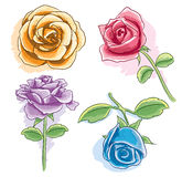 Beautiful Rose Royalty Free Stock Photo
