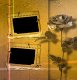 Beautiful rose on background of an old album sheet Stock Photos