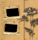 Beautiful rose on background of an old album sheet Royalty Free Stock Image