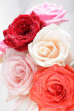 Beautiful rose background with water drops Royalty Free Stock Image
