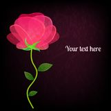 Beautiful rose on black background card with a Royalty Free Stock Photography