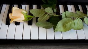 Beautiful rose on black and white piano keys, international women`s day, mother`s day, romance, love, flowers stock photos