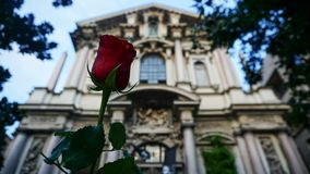Beautiful rose blooming behind ancient building in Roman style in Milan royalty free stock photos