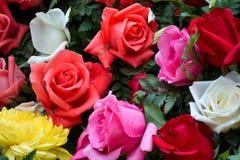 Free Beautiful Rose Blooms Royalty Free Stock Photos - 22673988