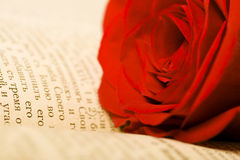 Beautiful rose on book stock images