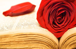 Beautiful rose on book Royalty Free Stock Images