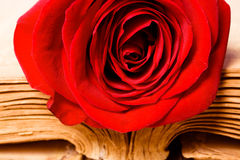 Beautiful rose on book Stock Photos