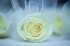 Beautiful rose bouquets Stock Photos