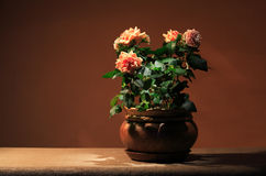 Rose In Flowerpot Royalty Free Stock Photography
