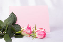 Beautiful rose and card for your text Royalty Free Stock Photo