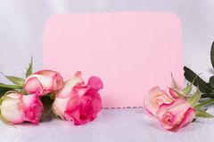 Beautiful rose and card for your text Royalty Free Stock Image