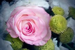 Beautiful rose flower in a bouquet close-up. stock photo