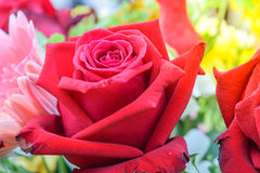 Beautiful rose flower in a bouquet Stock Photography