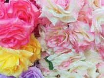 Beautiful rose flowers Stock Photography
