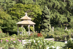 Beautiful Rose Garden Stock Images