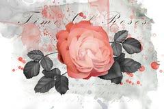 Beautiful Rose Illustration. Beautiful pink watercolor rose illustration Stock Photo